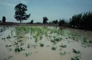 9-flood_peru